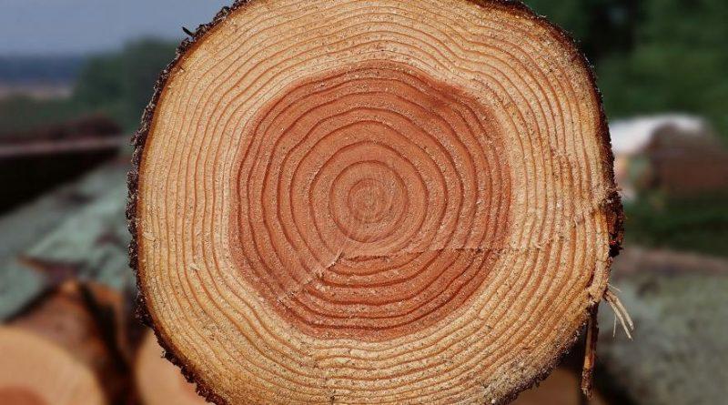 Теплопроводность древесины и плотность дерева